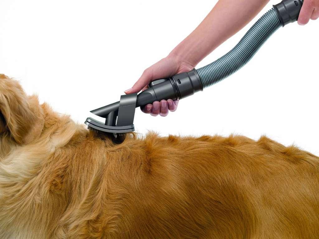 Пылесос дайсон от собаки купить насадку для пылесоса dyson